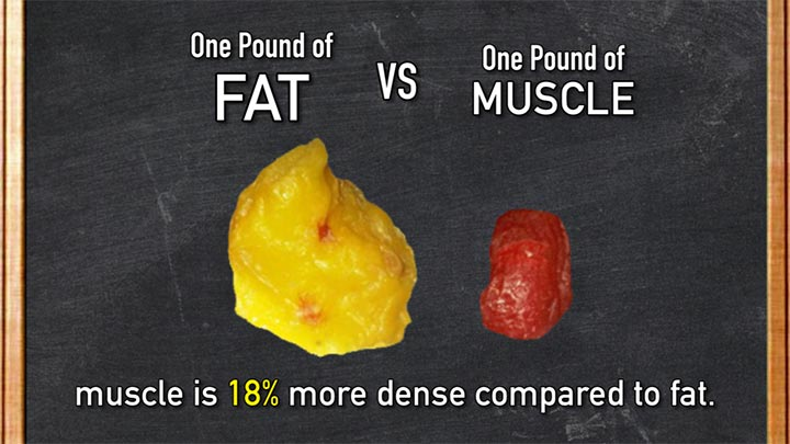 Muscle is about 18% more dense compared to fat. So one of muscles takes up  space compare to one pound of fat.